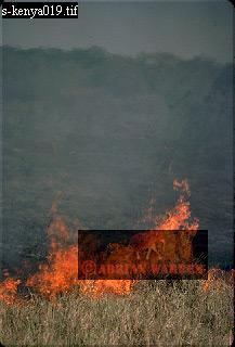 VELDT FIRE, Zululand, South Africa