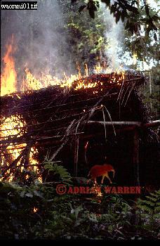 WAORANI INDIANS: Hut Burning before moving on, rio Cononaco, Ecuador, 1983
