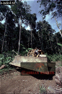 BULLDOZER, Forest Clearance for Road Building, Halmahera, Molluccas, Indonesia