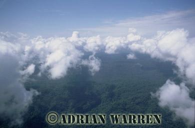 Aerials (aerial photo) of South America: rainforest, Ecuador, 2002