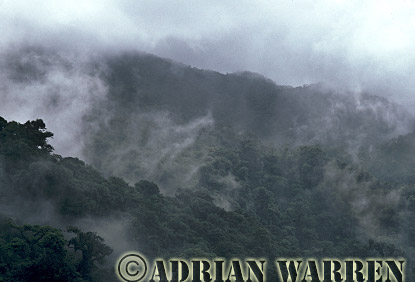 Aerial view: CLOUD FOREST, Monteverde, Costa Rica