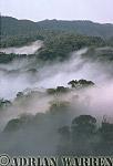 MISTY FOREST DAWN, Nyungwe Forest, Rwanda, Africa, 1990