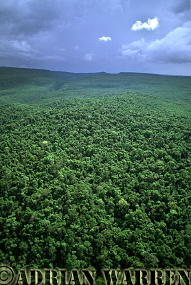 Aerial view: Forest near Auyantepui, Venezuela