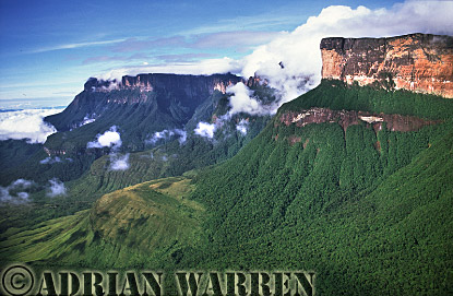 Aerial view: Forest on the slope of Mount Auyantepui, Venezuela