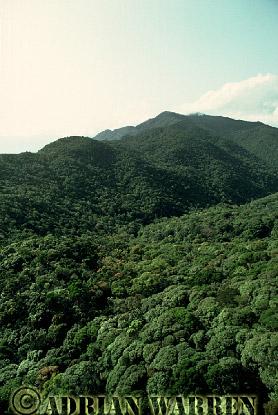 Aerial view: Tropical Rain Forest, Queensland, Australia