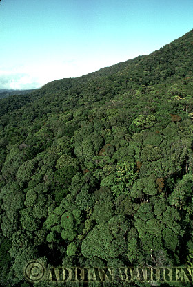 Aerial view: Tropical Rain Forest, Queensland, Australia