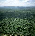 Aerials (aerial photo) of South America: rainforest, rio Cononaco, Ecuador, 2002