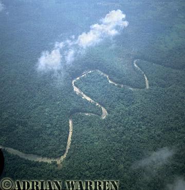 Aerials (aerial photo) of South America: rainforest, rio Cononaco, Ecuador, 2002