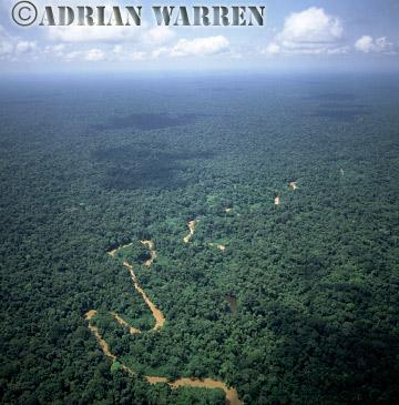 Aerials (aerial photo) of South America: rainforest and River Cononaco, Ecuador, 2002