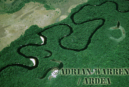 Aerial view: Rain Forest with Oxbow, Venezuela