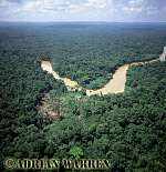 Aerials (aerial photo) of South America: rainforest and River Cononaco, Ecuador, 2002
