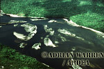 Aerial view: Rain Forest with River, Venezuela