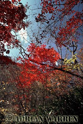 Autumn, Soraksan National Park, South Korea