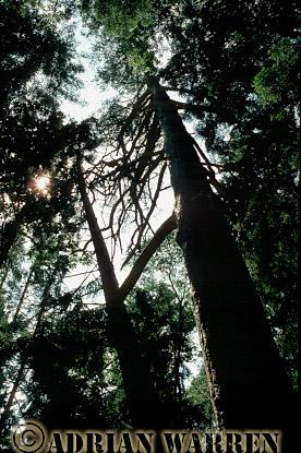 Bialowieza Forest, Poland