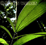 TROPICAL RAIN FOREST, Suriname