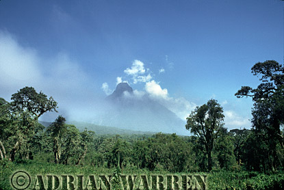 MT. MIKENO and Nettles, Virunga Volcanoes, Rwanda, 1991