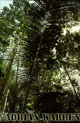 Forest interiors of South America :