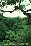 Forest interiors of South America : GALLERY FOREST, Apure, Llanos, Venezuela, 1981