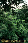 Forest interiors of South America : TROPICAL RAIN FOREST, Costa Rica, 1982