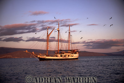 Three masted Brig, romantically named -The Golden Cachalot- after the Sperm Whale, Fernandina, Galapagos, Ecuador