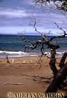 James BAy, James Island, Galapagos, Ecuador