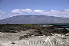 Volcan Darwin from Pointa Espinosa, Fernandina, Galapagos, Ecuador