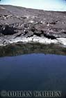 Crater Pool, Pointa Espinosa, Fernandina, Galapagos, Ecuador