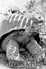 Giant Tortoise (Geochelone elephantopus darwini), Volcan Alcedo, Isabela Island, Galapagos, Ecuador