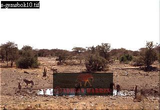 GEMSBOK (Oryx gazella) and KUDU(Tragelaphus strepsiceros) at Water Hole, Etosha Natonal Park, Namibia