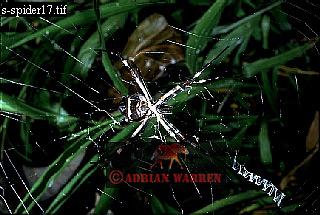 SPIDER, Camarata, Venezuela