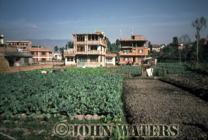 Cabbages in city gardens, Kathmandu, Nepal, Asia