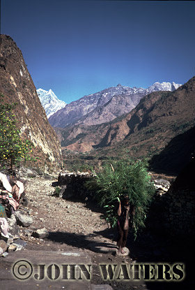 Nepal, Asiai carrying fodder near Tatopani, Nepal, Asia
