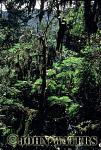 Rhodadendron forest, near Ghorepani, Nepal, Asia, Himalayas