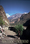 Nepal, Asiai carrying fodder near Tatopani, Nepal, Asia