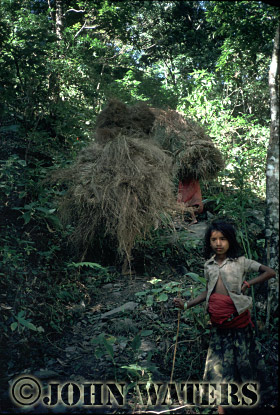Girls collecting hay, near Beni, Nepal, Asia