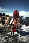 Pack Mule, Ghorepani, Nepal, Asia
