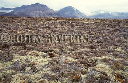 High Arctic Tundra, Svalbard, Norway, Scandanavia, Arctic