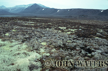 High Arctic Tundra, Svalbard, Norway, Scandanavia, Arctic