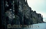 Brunnich's Guillemot (Uria lomvia), Nesting Cliffs, Svalbard, Norway, Scandanavia, Arctic