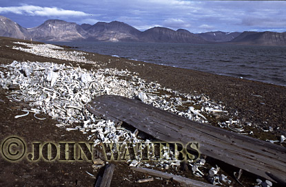 Aftermath of Beluga Whaling Camp (abandoned 1940), Svalbard, Norway, Scandanavia, Arctic