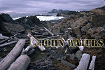 Axel Island Driftwood, Bellsund, Svalbard, Norway, Scandanavia, Arctic
