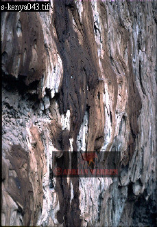 Wall of LAVA TUBE, Mount Suswa, African Rift Valley, Kenya, 1988