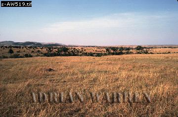 MASAI MARA Reserve, Kenya, 1982