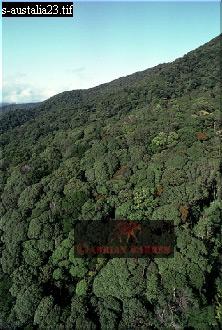TROPICAL RAIN FOREST, Queensland, Australia