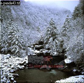 QINLING MOUNTAINS in Winter, Giant Panda Habitat, China