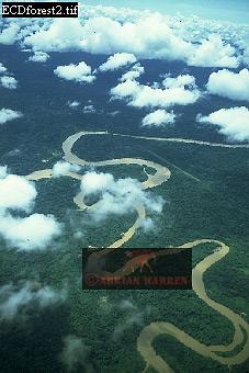 Rain Forest with Ox-Bows, River Cononaco, Ecuador, 1993