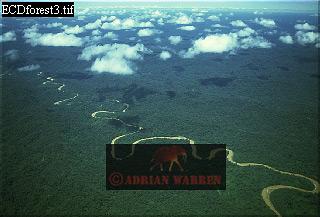 Aerials (aerial photo) of South America: rainforest with Ox-Bows, River Cononaco, Ecuador, 1993