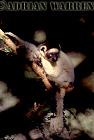 Verreaux's Sifaka (Propithecus verreauxi) resting, Berenty, Southern Madagascar