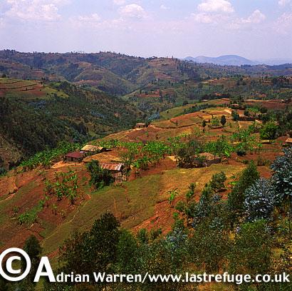 Landscape of Africa: Intensive agriculture in Rwanda, 2003