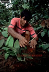 EPENA INDIANS: Collecting Poison Frogs, Southern Colombia, 1994